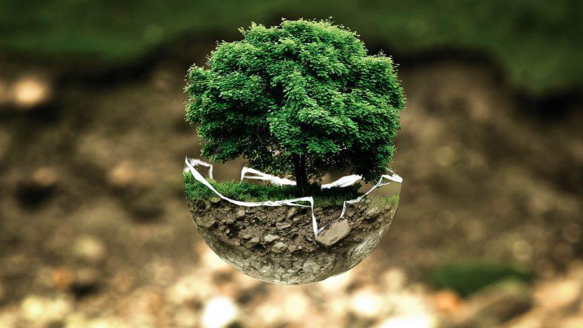 środowisko, natura, ekologia.
