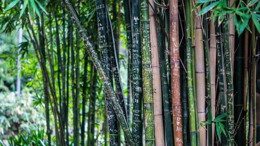 las, dżungla, wycinka, tropiki